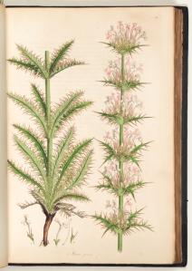 Flora Graeca, vol. 1, p. 28