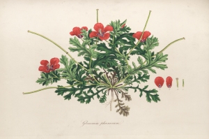 Flora Graeca, vol. 5